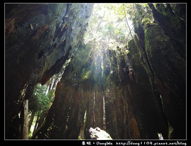 【南投遊記】杉林溪。先民隧道。千古紅繪。天地眼
