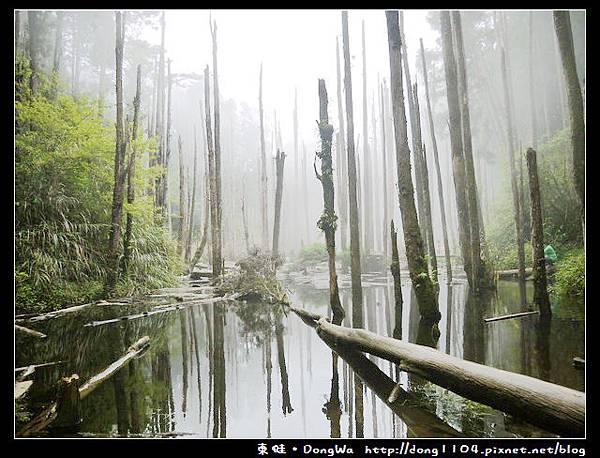 【南投遊記】杉林溪。忘憂森林。仁淵茶業