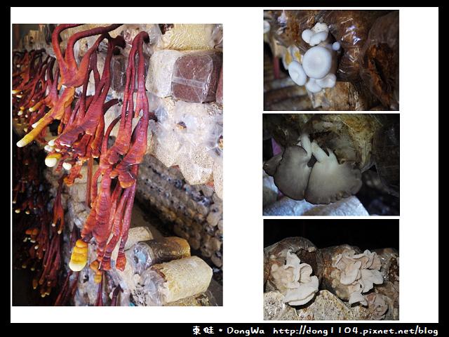【南投遊記】埔里。豐年農場。菇菇生態導覽
