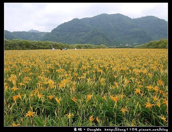 【南投遊記】魚池鄉。頭社活盆地休閒農業區。金針花海