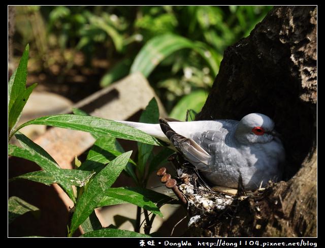 【新竹遊記】森林鳥花園。遛遛鳥。花冠皺盔犀鳥