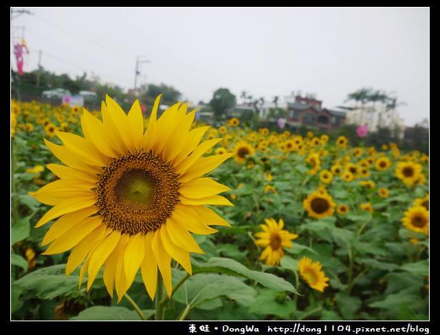 【桃園遊記】平鎮市103年度花海迷宮。延平路三段260巷