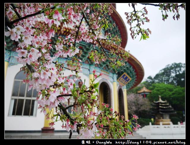 【新北遊記】2015新北市櫻花季。淡水無極天元宮