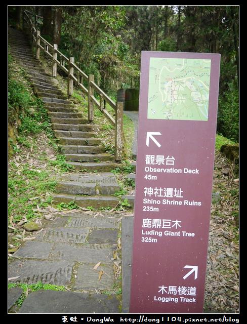 【嘉義遊記】奮起湖。奮起步道。神社遺址。鹿鼎巨木