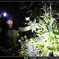 【嘉義住宿】龍雲農場。夜間生態導覽。搗麻糬DIY