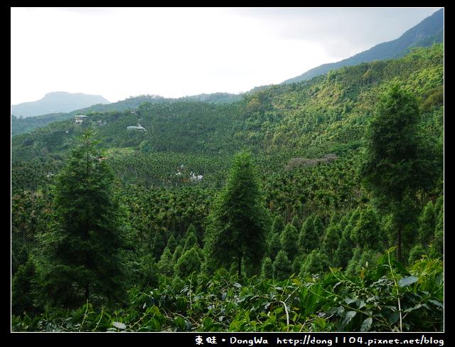 【台南食記】吃遍西拉雅。東山高峰咖啡。天池森林步道