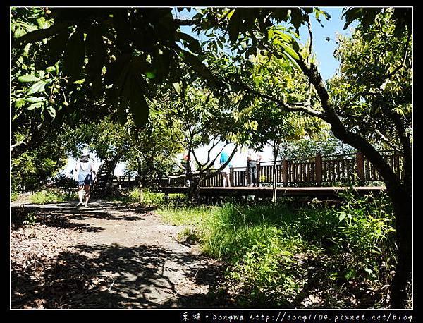 【台南遊記】玩瘋西拉雅。東山區李子園社區產業協會。李仔園登山步道。咖啡樹DIY