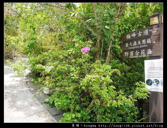 【台南遊記】玩瘋西拉雅。梅峰登山古道