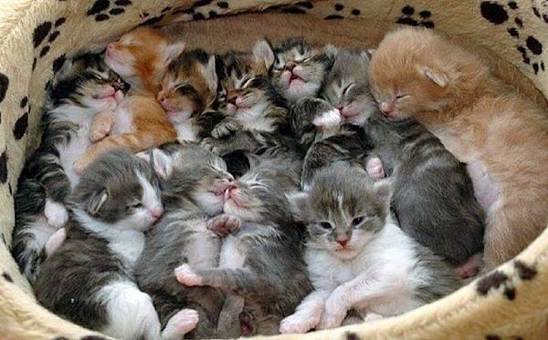 【貓咪日記】無防備又超萌的小貓睡姿二十選