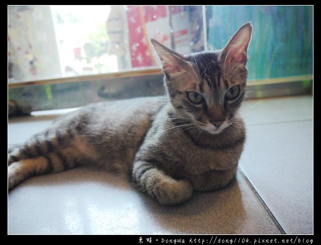 【新北食記】淡水老街。貓雨貓狗主題咖啡館。開放式貓咪空間