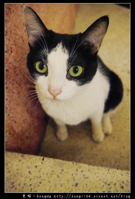 【台南食記】肥貓故事館。貓咪咖啡館。寵物餐廳