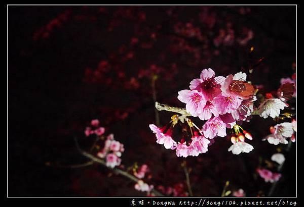 【桃園遊記】龜山壽山嚴觀音寺賞櫻。壽山岩公園夜櫻