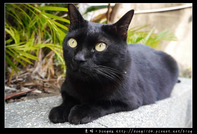 【台南食記】貓門咖啡 Cafe' Moment。貓咪咖啡館。寵物餐廳