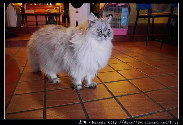 【台北食記】貓咪咖啡館 超多貓咪陪喝下午茶 芝山捷運站旁 小貓花園