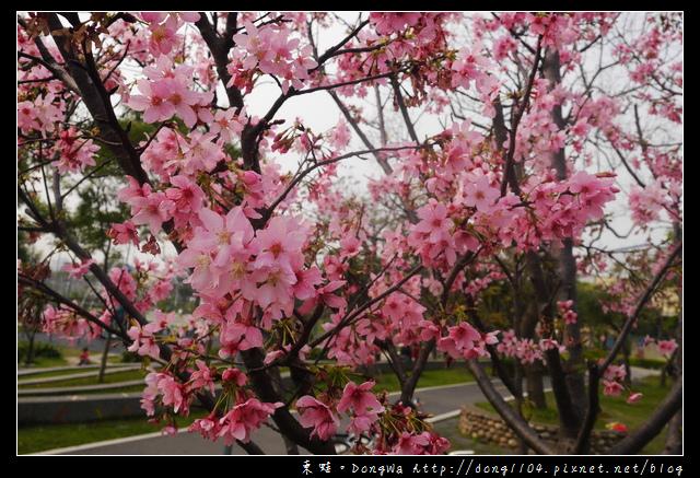 【桃園遊記】蘆竹南崁賞櫻好去處|光明河濱公園|富士櫻紀念園區