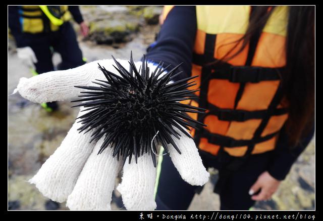 【澎湖遊記】東海生態之旅|潮間帶踏浪|抱墩浮潛餵魚秀|銀海旅遊
