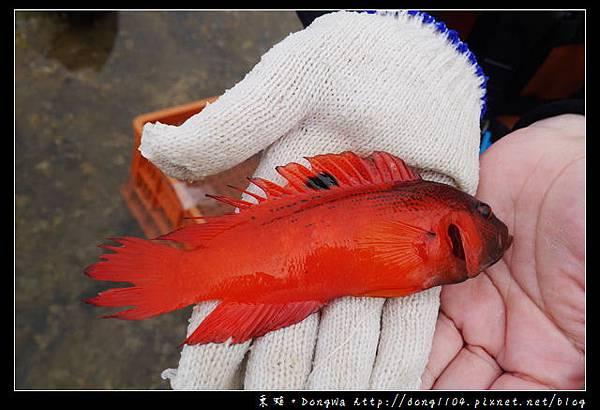 【澎湖遊記】東海生態之旅 潮間帶踏浪 抱墩浮潛餵魚秀 銀海旅遊