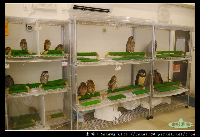【大阪自助/自由行】天神橋筋咖啡館|貓頭鷹主題咖啡館|OWL Family 大阪店