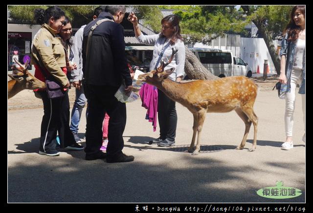 【大阪自助/自由行】奈良餵鹿好好玩 快拿出鹿仙貝來收服鹿寶貝吧!