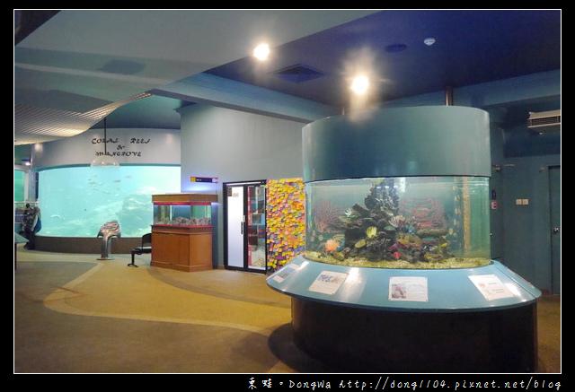 【沙巴自助/自由行】沙巴景點|沙巴大學 UMS|深海水族館( Aquarium and Marine Museum )