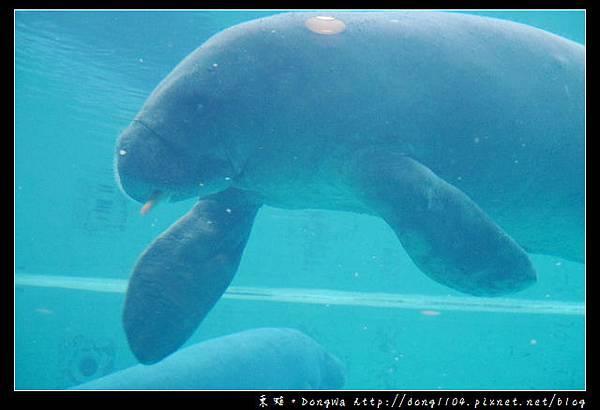 【沖繩自助/自由行】沖繩免費景點 無料沖兒海豚劇場 海洋博覽公園