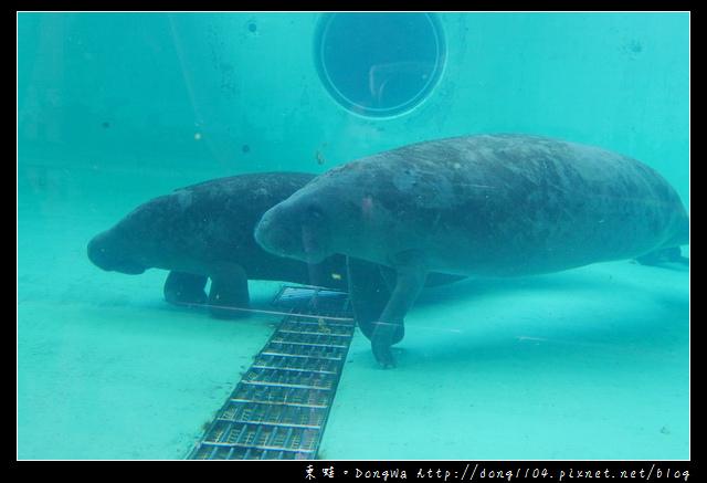 【沖繩自助/自由行】沖繩免費景點|無料沖兒海豚劇場|海洋博覽公園