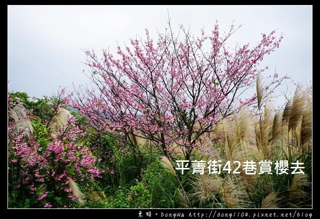 【台北遊記】2017.01.23 櫻花花況|陽明山平菁街42巷賞櫻去