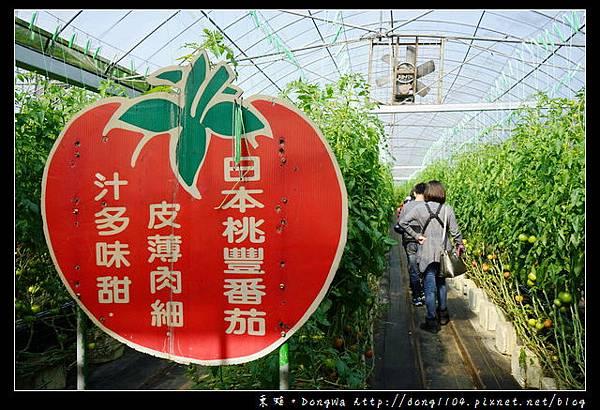 【新竹遊記】新竹免費景點 全國唯一蕃茄品種最多 金勇DIY蕃茄休閒農場