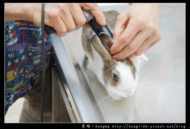 【基隆寵物醫院推薦】小動物免費健康檢查|基隆寵物醫院-汎汶動物醫院