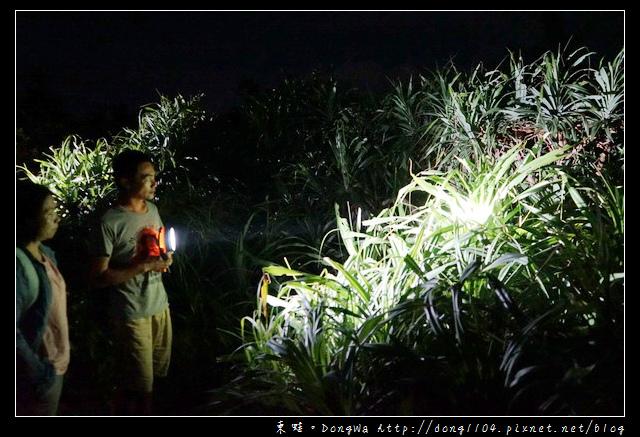 【綠島遊記】綠島民宿夜遊活動|綠島生態介紹 夜探梅花鹿 津田氏大頭竹節蟲