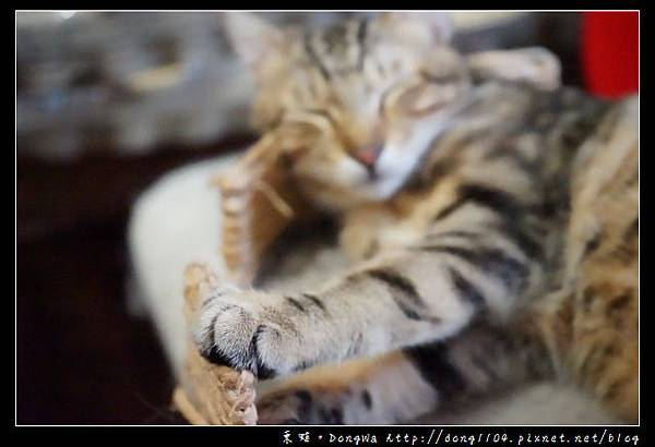 【台北食記】台北貓咪咖啡館 大安區寵物餐廳 甦活零工坊