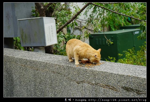 【新北遊記】烏來老街溫泉街一日遊|烏來可愛貓咪滿街跑