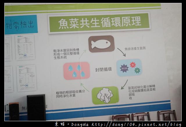 【桃園農場小旅行】大溪魚菜工坊 魚菜共生盆栽DIY