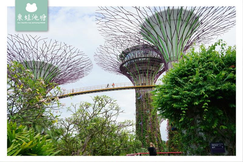 【新加坡免費景點推薦】Gardens by the Bay 濱海灣花園 SUPERTREE GROVE