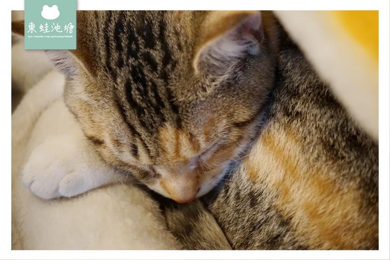 【大溪咖啡館推薦】貓咪咖啡廳 大溪湧泉水手沖咖啡 大溪草店尾事務所