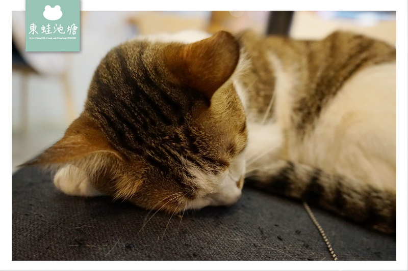 【台北大同區貓咪咖啡館】台灣設計師品牌 三貓小舖貓咪文創咖啡館