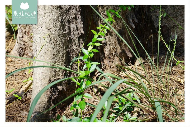 【苗栗竹南景點導覽推薦】五行文化低碳旅遊 竹南濱海森林遊憩區 官義渡生態公園 塭內社區發展協會