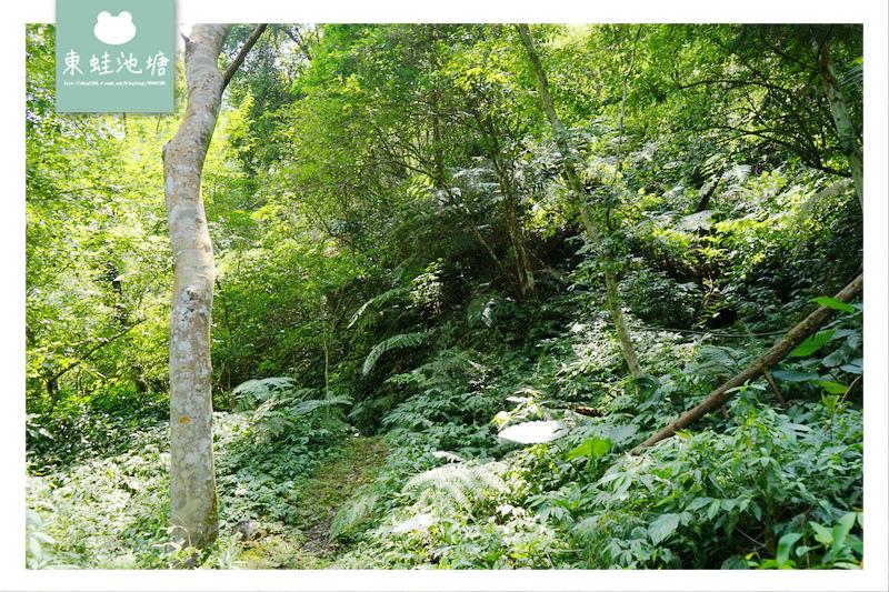 【苗栗南庄免費景點】彷彿走進龍貓森林裡 鵝公髻原生植物園區