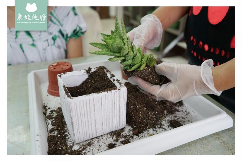 【宜蘭五結室內景點推薦】自己動手DIY做多肉盆栽 親子出遊好去處 多肉王國
