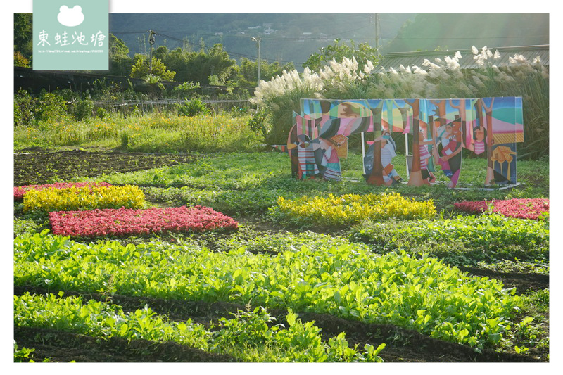 【桃園復興賞花趣】泰雅族菱形紋花園 薰衣草花海 溪口地景藝術