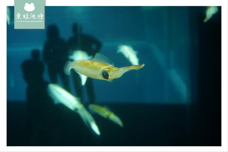 【大阪親子景點推薦】大阪港天保山摩天輪旁 日本最壯觀水族館之一 大阪海遊館 Osaka Aquarium KAIYUKAN