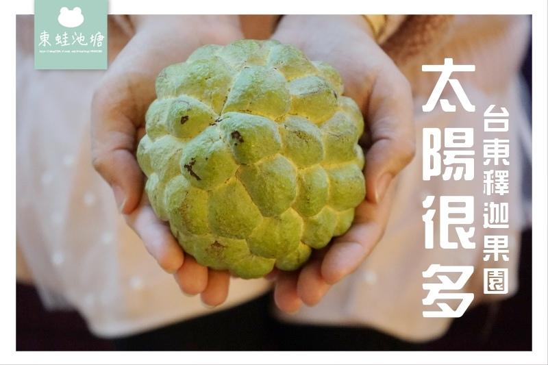 【水果宅配推薦】台東產地直送 甜度爆表 太陽很多釋迦果園