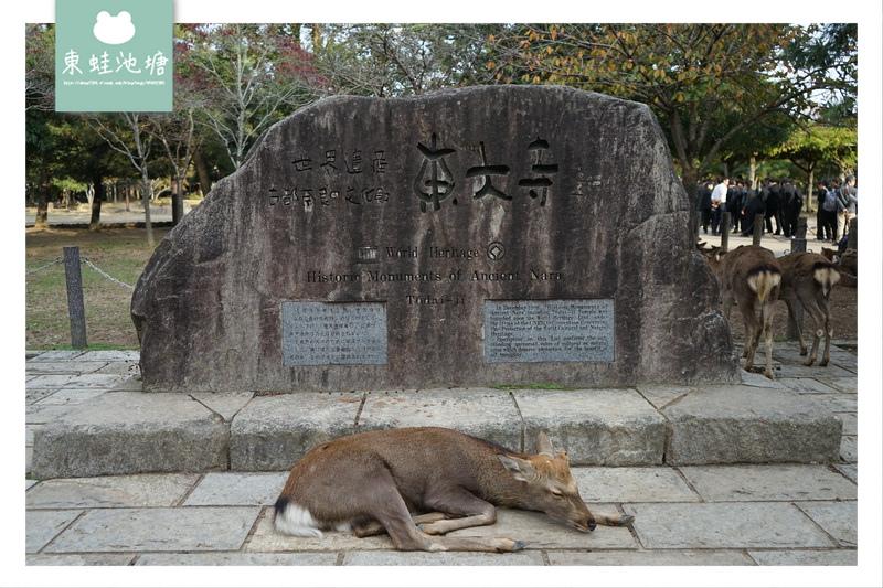 【奈良景點推薦】世界遺產古都奈良文化財 東大寺 大佛的鼻孔
