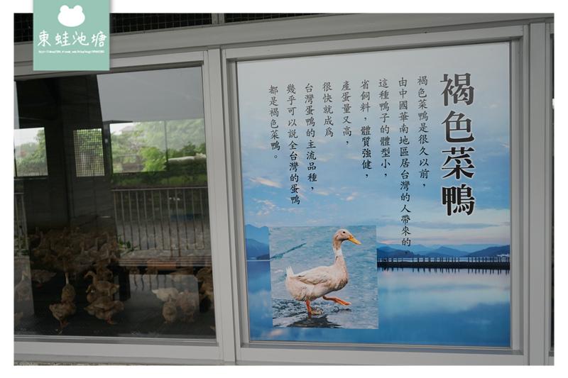 【宜蘭礁溪親子景點推薦】室內景點餵鴨鴨 清水模鴨舍超好拍 甲鳥園