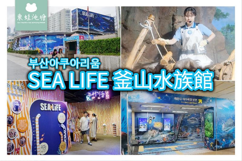【釜山海雲台景點推薦】釜山親子室內景點好選擇 SEA LIFE 釜山水族館 부산아쿠아리움