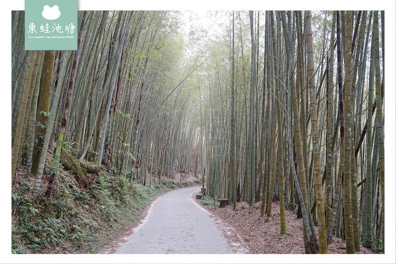 【嘉義梅山免費景點推薦】台灣版京都嵐山竹林小徑 瑞里綠色隧道