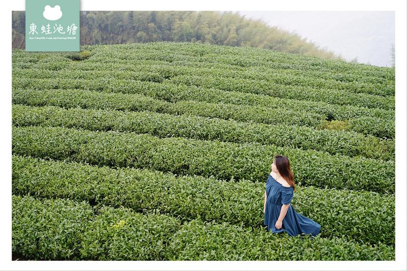 【嘉義梅山免費景點推薦】御茶園廣告拍攝地點 360度視野零死角 觀賞阿里山日出 海鼠山1314觀景台