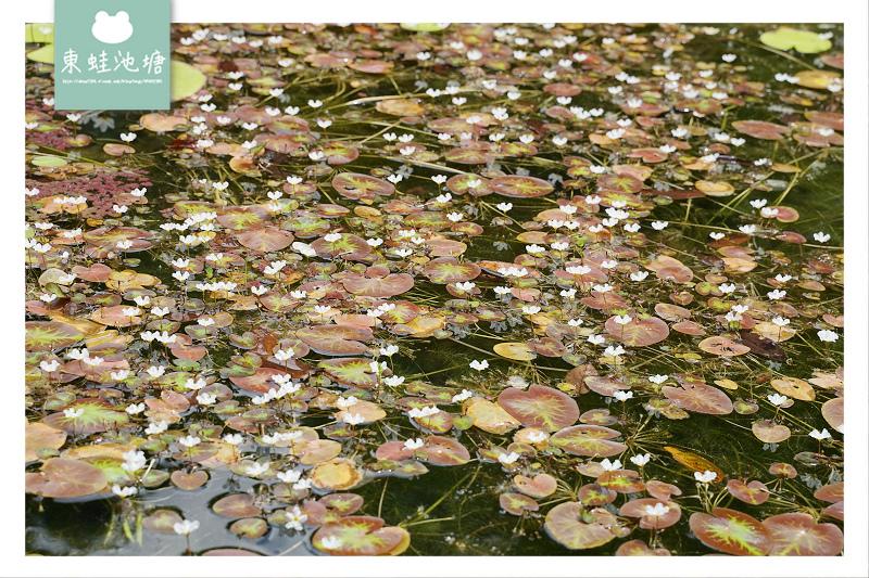 【台中一日遊景點推薦】台灣八景/三大林場之一 來回八小時主峰步道 八仙山國家森林遊樂區