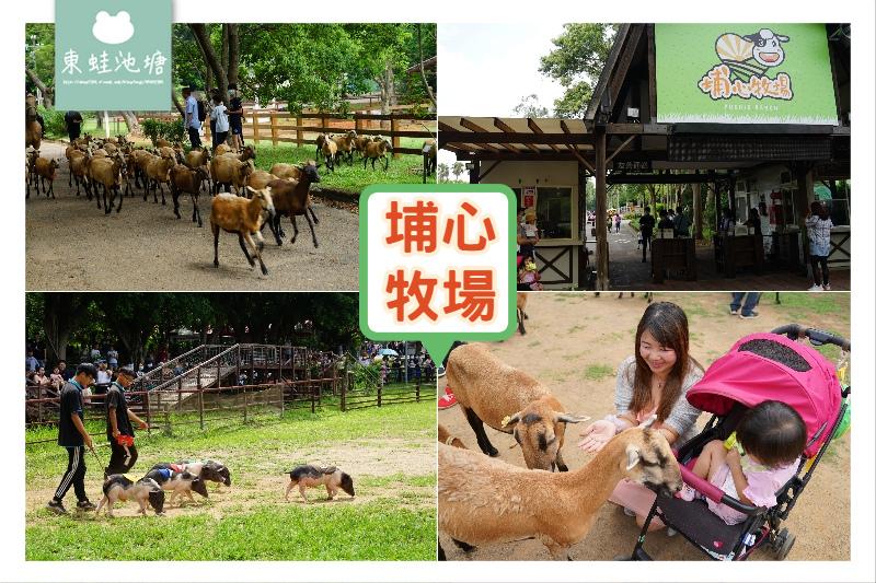 【桃園親子景點推薦】可愛動物暖暮萌萌村 網美拍照好去處 楊梅埔心牧場