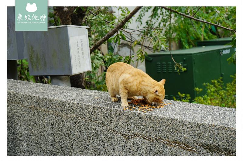 【烏來老街溫泉街一日遊】烏來可愛貓咪滿街跑 烏來覽勝大橋+烏來法蒂瑪聖母朝聖地